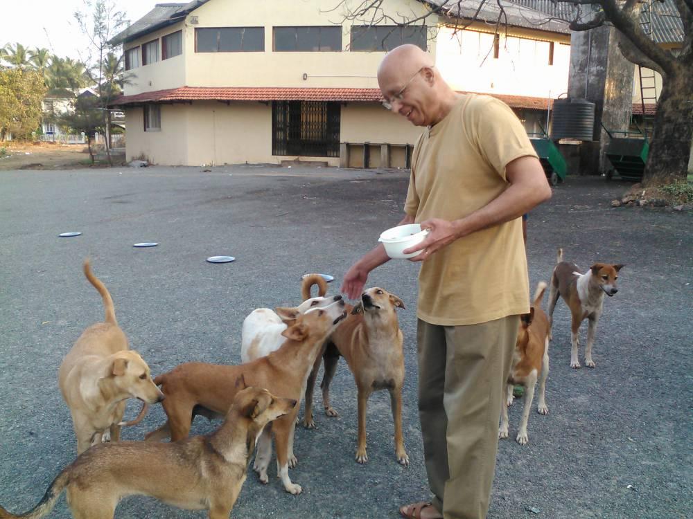 Bannu feeds the neighbourhood dogs